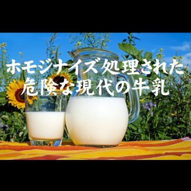 ホモジナイズ処理された危険な現代の牛乳<おすすめはノンホモ牛乳>