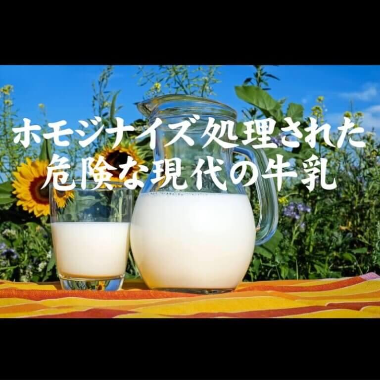 ホモジナイズ処理された 危険な現代の牛乳