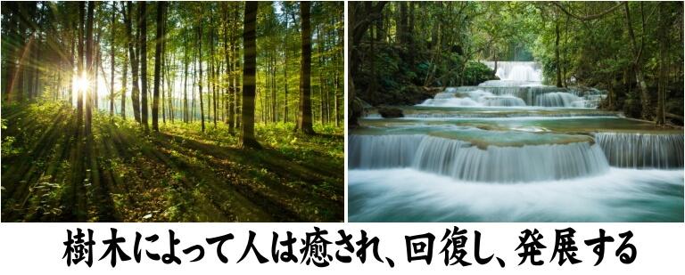 樹木によって人は癒され、回復し、発展する